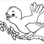 Bird Coloring Pages Inspirational Photos Cuckoo Bird Coloring Pages
