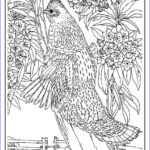 Bird Coloring Pages Unique Photography Printable Birds Coloring Pages for Adults