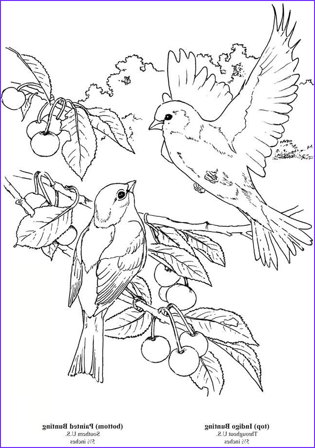 Bird Coloring Pictures Cool Photos Wel E to Dover Publications 6 Bird Colouring Pages