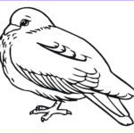 Bird Coloring Pictures New Stock Free Printable Pigeon Coloring Pages for Kids