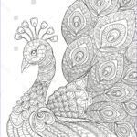 Black And White Coloring Pages For Adults Beautiful Photography Peacock Adult Antistress Coloring Page Black Stock Vector