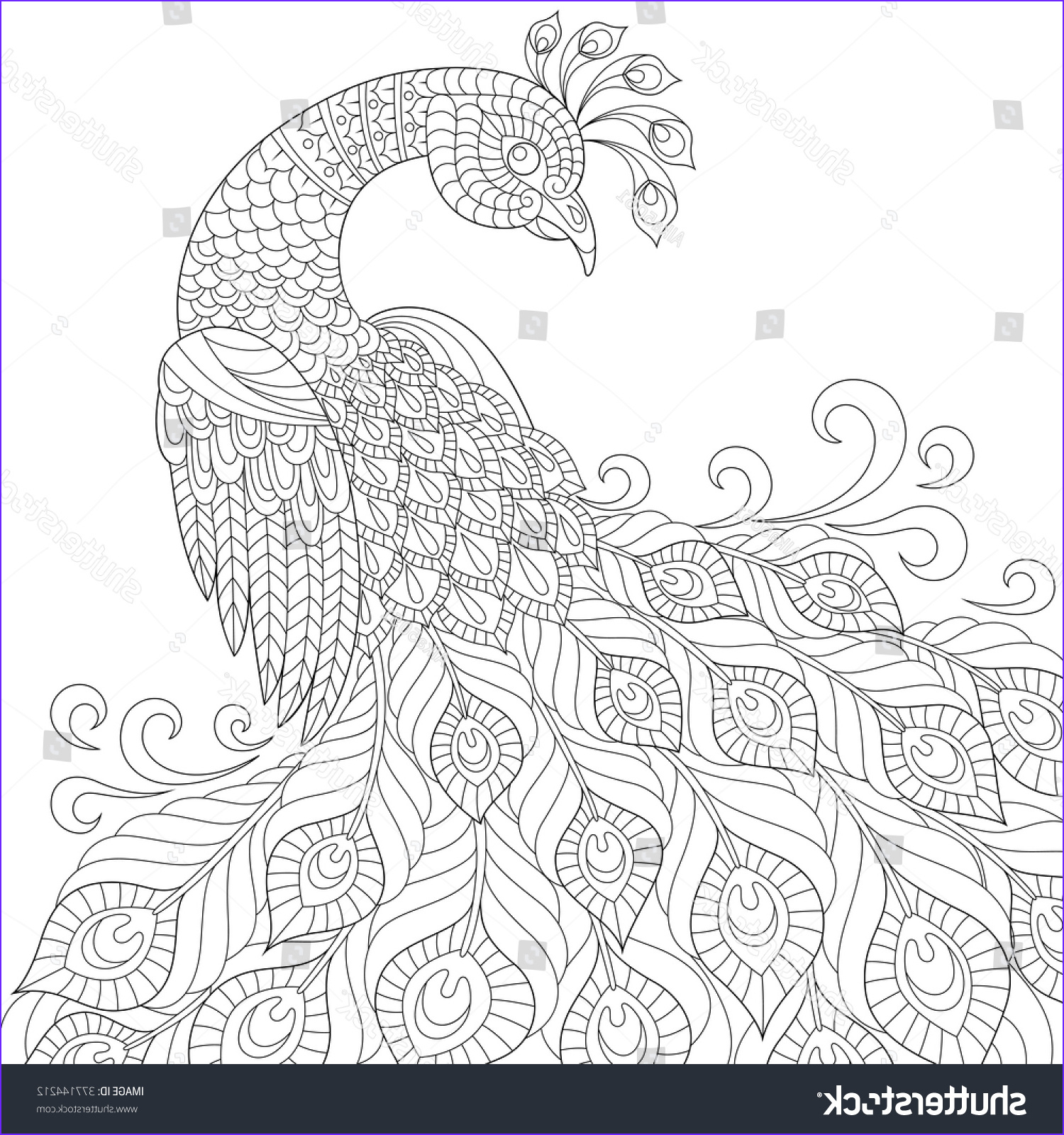 stock vector decorative peacock adult anti stress coloring page black and white hand drawn doodle for coloring
