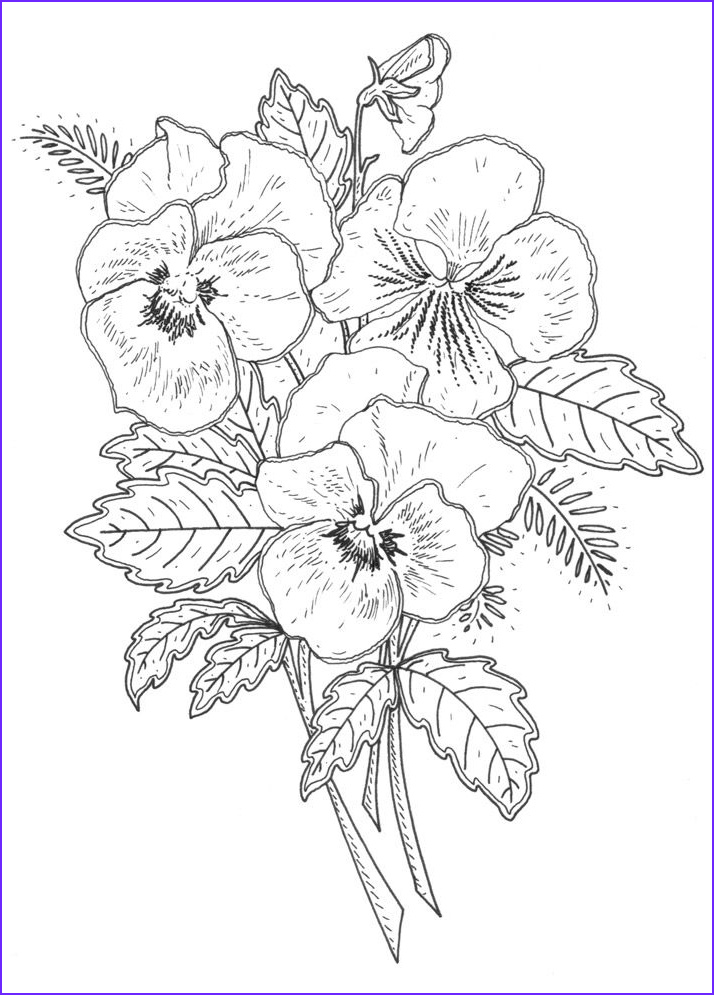 Black and White Coloring Pages for Adults Cool Gallery New Pansy Rubber Stamp Designs for Penny Black Ca