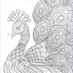 Black And White Coloring Pages For Adults Inspirational Photos Peacock Adult Antistress Coloring Page Black And White