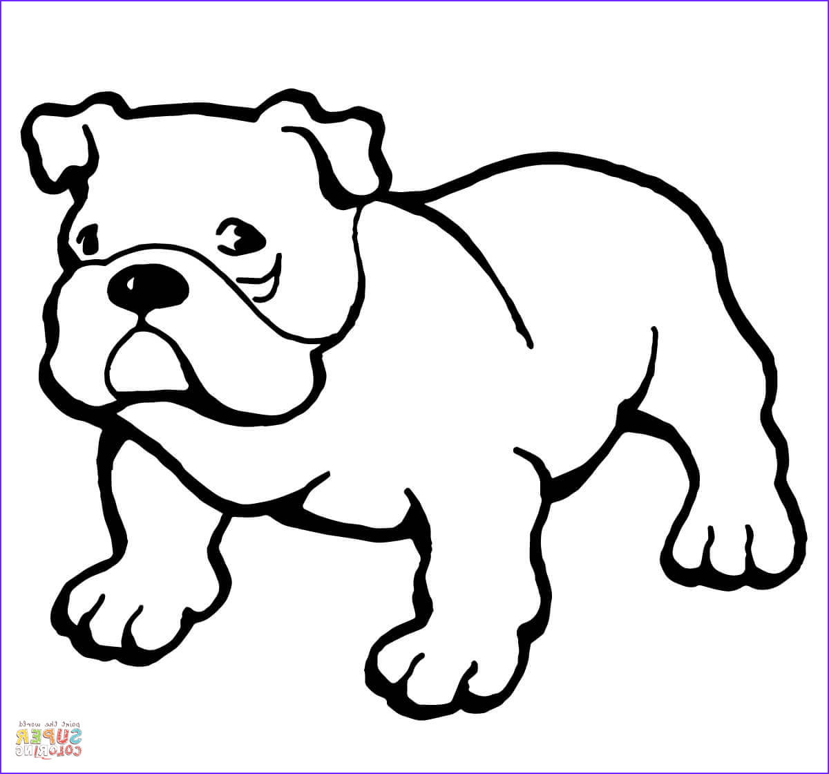 Bull Dog Coloring Pages Awesome Photography Bulldog Coloring Page