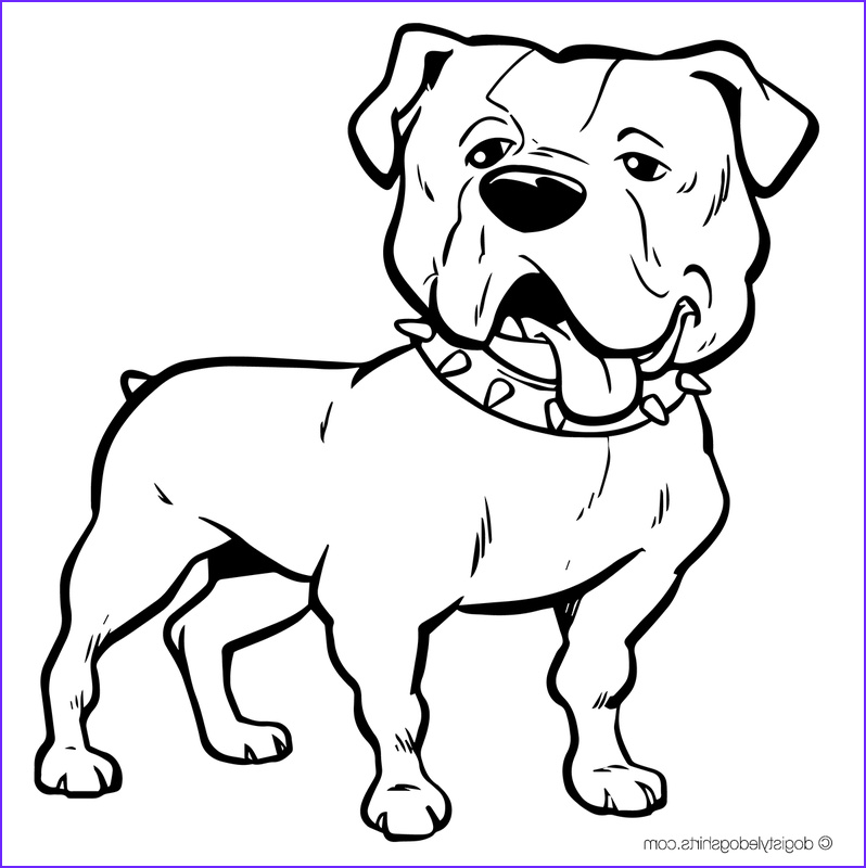 Bull Dog Coloring Pages Cool Collection Bulldog Face Drawing at Getdrawings
