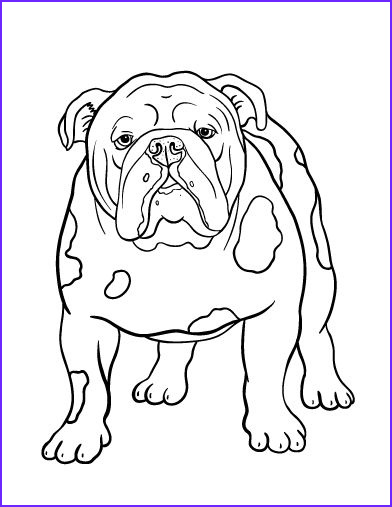 Bull Dog Coloring Pages Cool Collection Printable Bulldog Coloring Page Free Pdf At