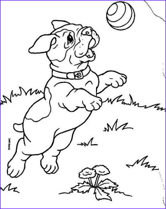Bull Dog Coloring Pages Luxury Image A Bulldog Puppy Catching A Ball Coloring Page