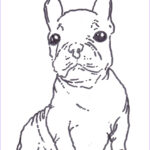 Bulldog Coloring Page Awesome Photos French Bulldog Coloring Pages Coloring Home