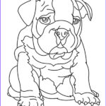 Bulldog Coloring Page Best Of Photography Drawing Bulldog Coloring Pages