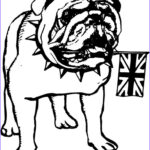 Bulldog Coloring Page Cool Stock 17 Best Images About Coloring On Pinterest