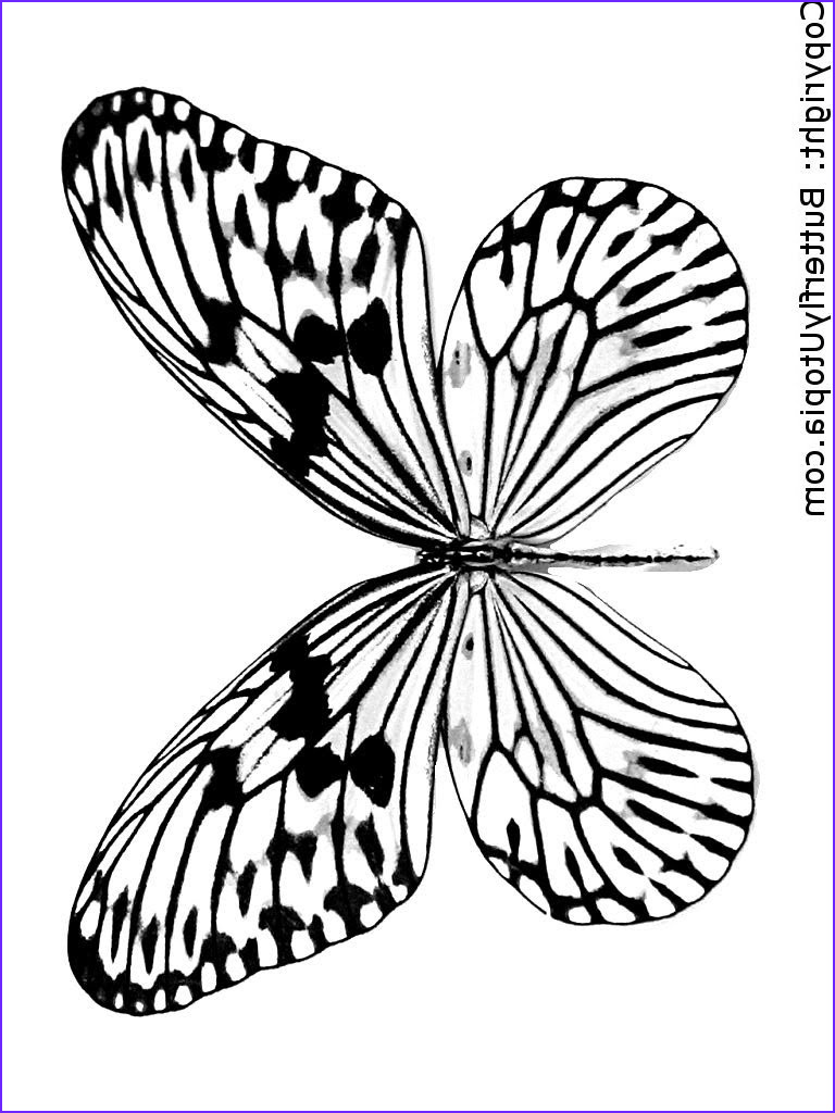 butterfly effect open is calling you