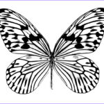 Butterfly Coloring Cool Collection Free Printable Butterfly Coloring Pages For Kids