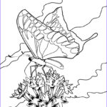 Butterfly Coloring Elegant Collection Free Printable Butterfly Coloring Pages For Kids