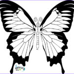 Butterfly Coloring Elegant Photography Butterfly Coloring Pages