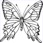 Butterfly Coloring Luxury Photos Butterfly Coloring Page Dr Odd