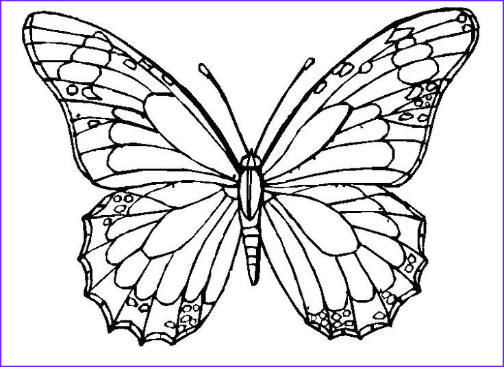 Butterfly Coloring Pages Awesome Image the Adult butterfly Coloring Pages butterflies Coloring