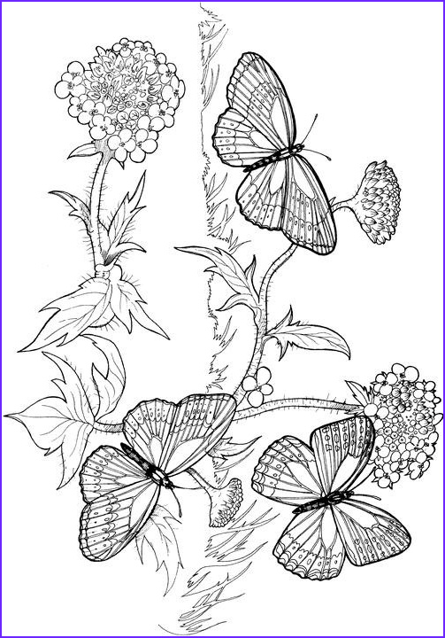 Butterfly Coloring Pages For Adults Awesome Photography Butterfly Coloring Page