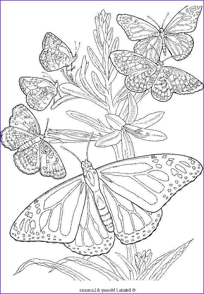 Butterfly Coloring Pages For Adults Beautiful Photos Free Printable Adult Butterfly Coloring Page