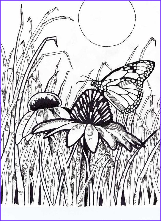 Butterfly Coloring Pages For Adults Best Of Collection Pinterest • The World's Catalog Of Ideas