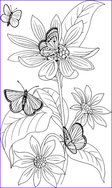 Butterfly Coloring Pages For Adults New Stock Butterfly Coloring Page