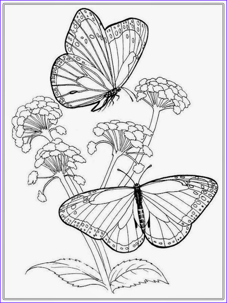 adult colouring in butterfly