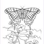 Butterfly Coloring Sheet Best Of Photos Free Printable Butterfly Coloring Pages For Kids