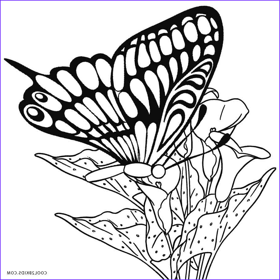 Butterfly Coloring Sheet Best Of Stock Printable butterfly Coloring Pages for Kids