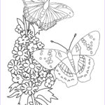 Butterfly Coloring Sheet Cool Image Butterfly Coloring Pages