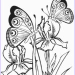 Butterfly Coloring Sheet Elegant Images Printable Butterfly Coloring Pages For Kids