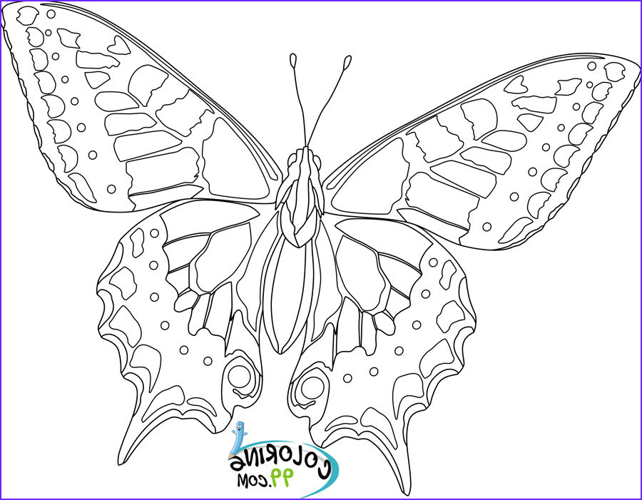 Butterfly Coloring Sheet New Collection butterfly Coloring Pages