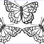 Butterfly Coloring Sheet New Photos Free Printable Adult Coloring Pages Butterflies