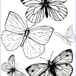 Butterfly Coloring Sheet Unique Stock Free Printable Butterfly Colouring Pages In The Playroom