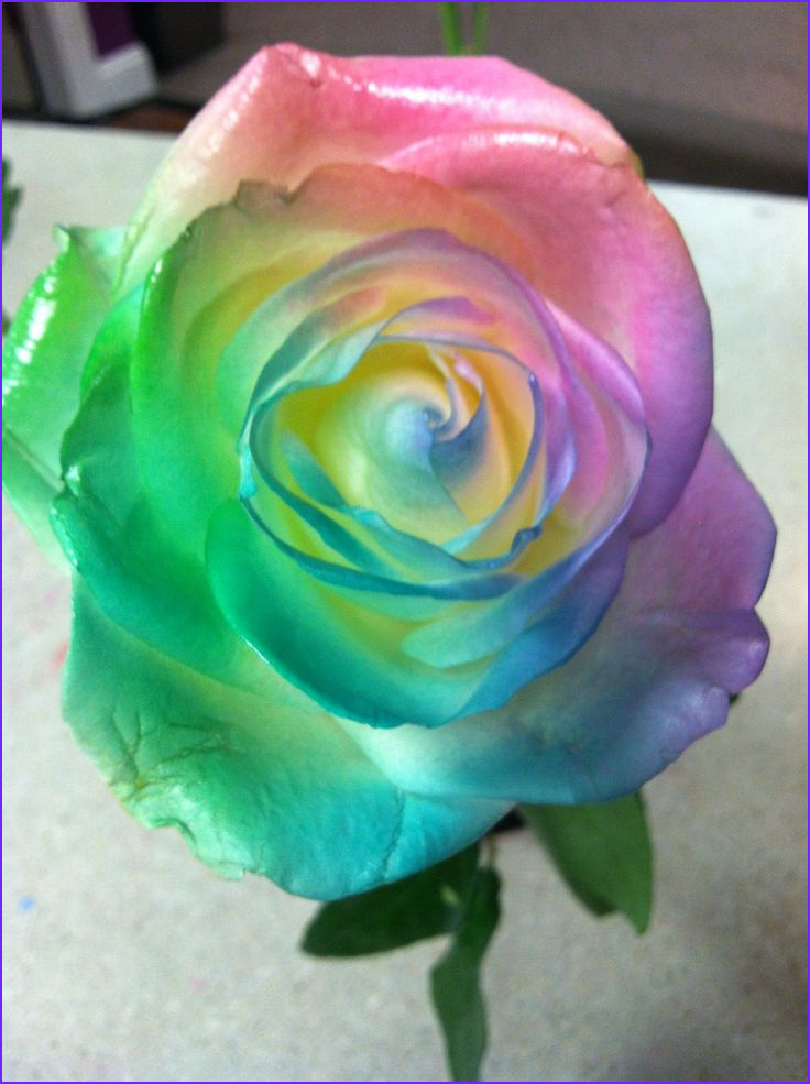 Can You Tie Dye with Food Coloring Elegant Image 17 Best Images About Science Project On Pinterest