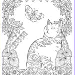 Cat Coloring Pages for Adults Unique Stock Cat Coloring Page
