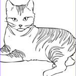 Cat Coloring Pictures Best Of Photography Free Printable Cat Coloring Pages For Kids