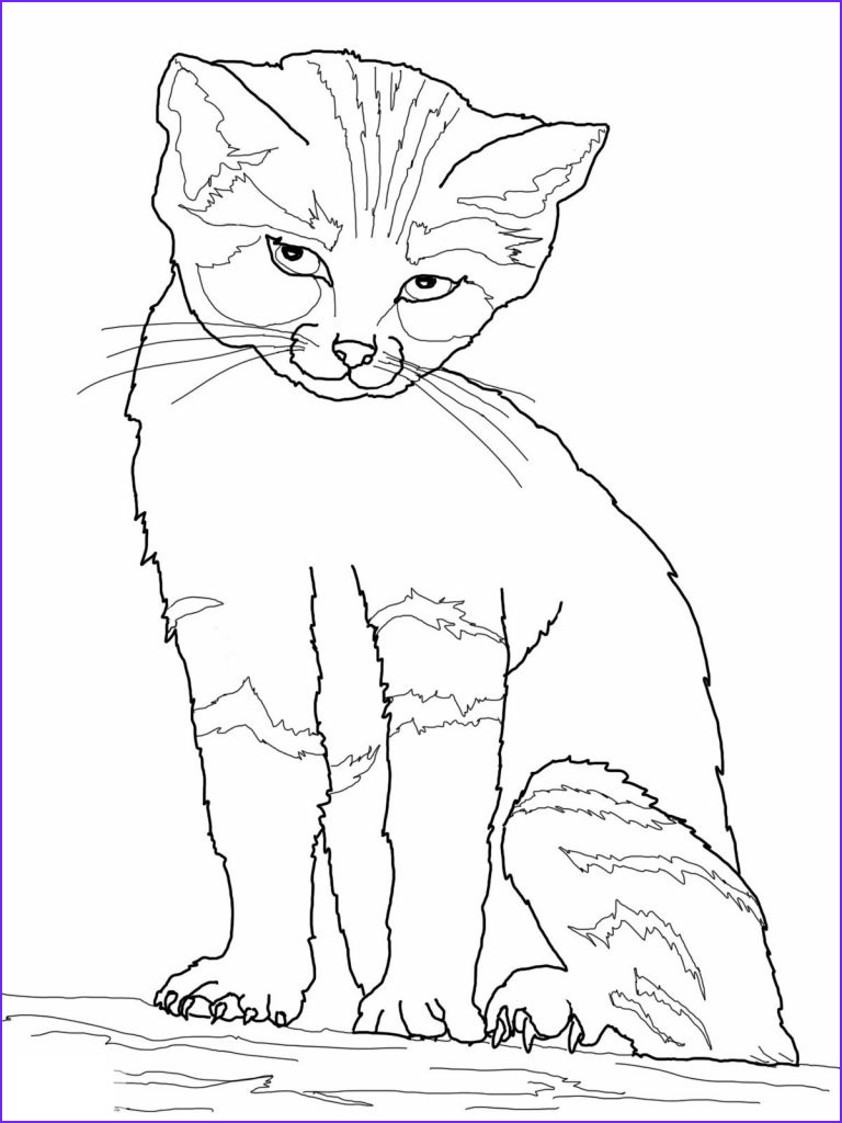 Cat Coloring Pictures Cool Photography Free Printable Cat Coloring Pages for Kids