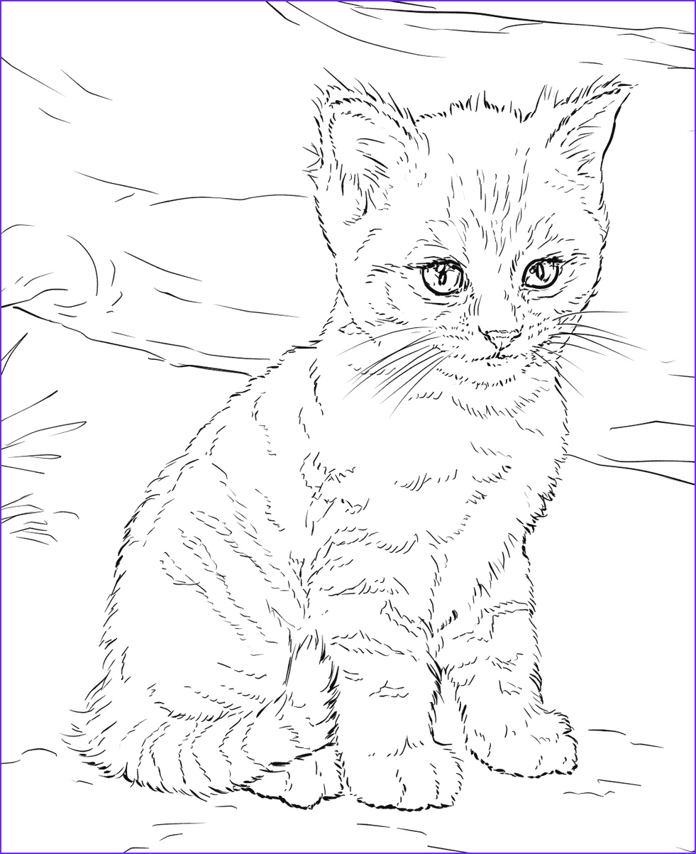 Cat Coloring Pictures Cool Photos Cat Coloring Pages for Adults Best Coloring Pages for Kids