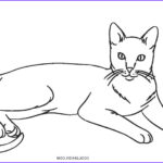 Cat Coloring Pictures Cool Photos Free Printable Cat Coloring Pages For Kids