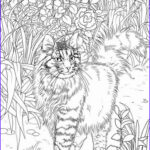 Cats Adult Coloring Books Luxury Images Best Coloring Books For Cat Lovers Cleverpedia