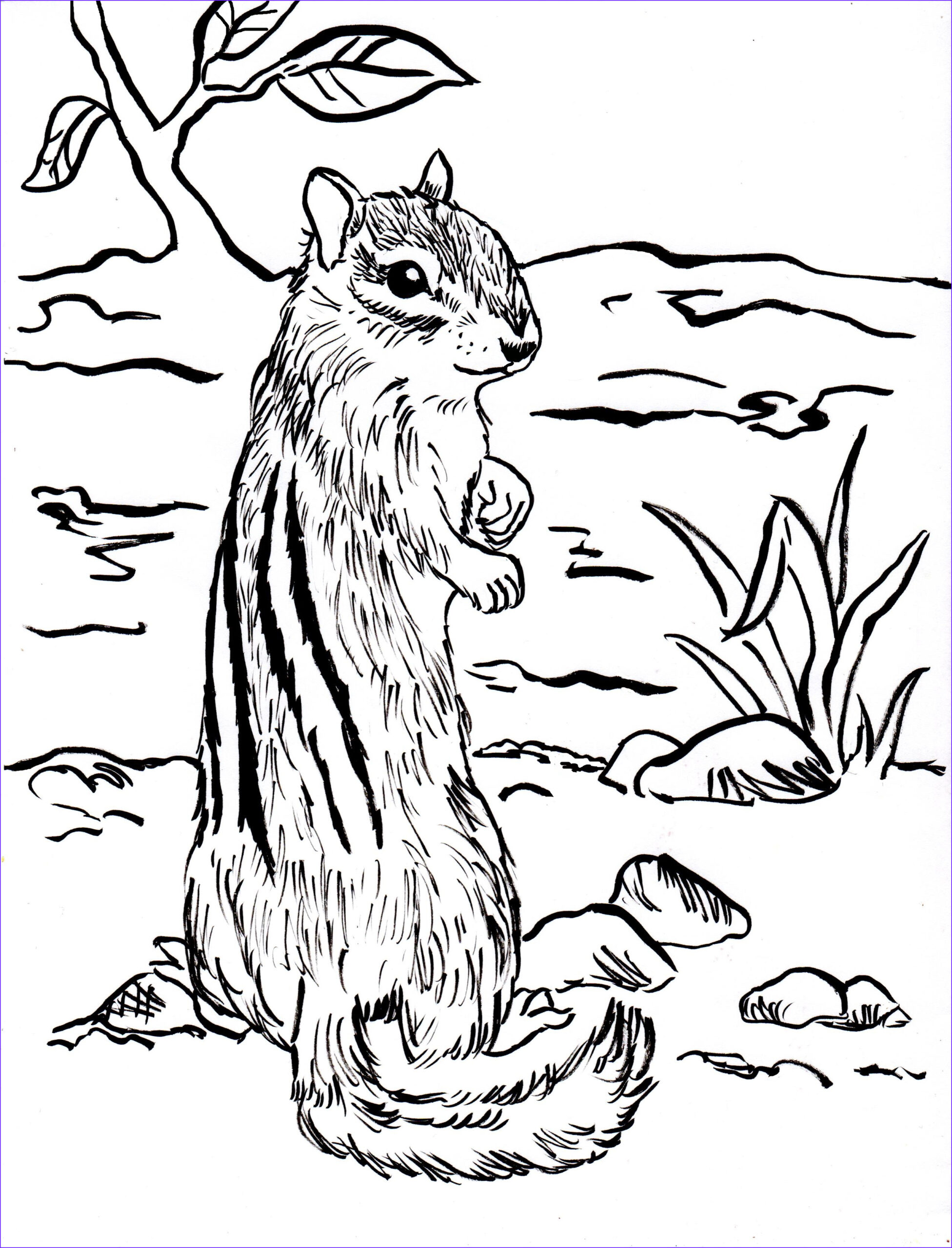 Chipmunk Coloring Pages Beautiful Stock Chipmunk Coloring Page Samantha Bell