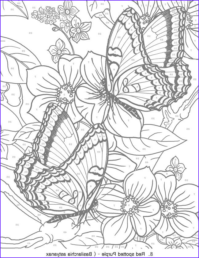 Color by Number Coloring Books for Adults Best Of Collection 17 Best Images About Random Coloring Pages On Pinterest