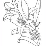 Coloring Book Flowers Beautiful Collection Flower Coloring Pages