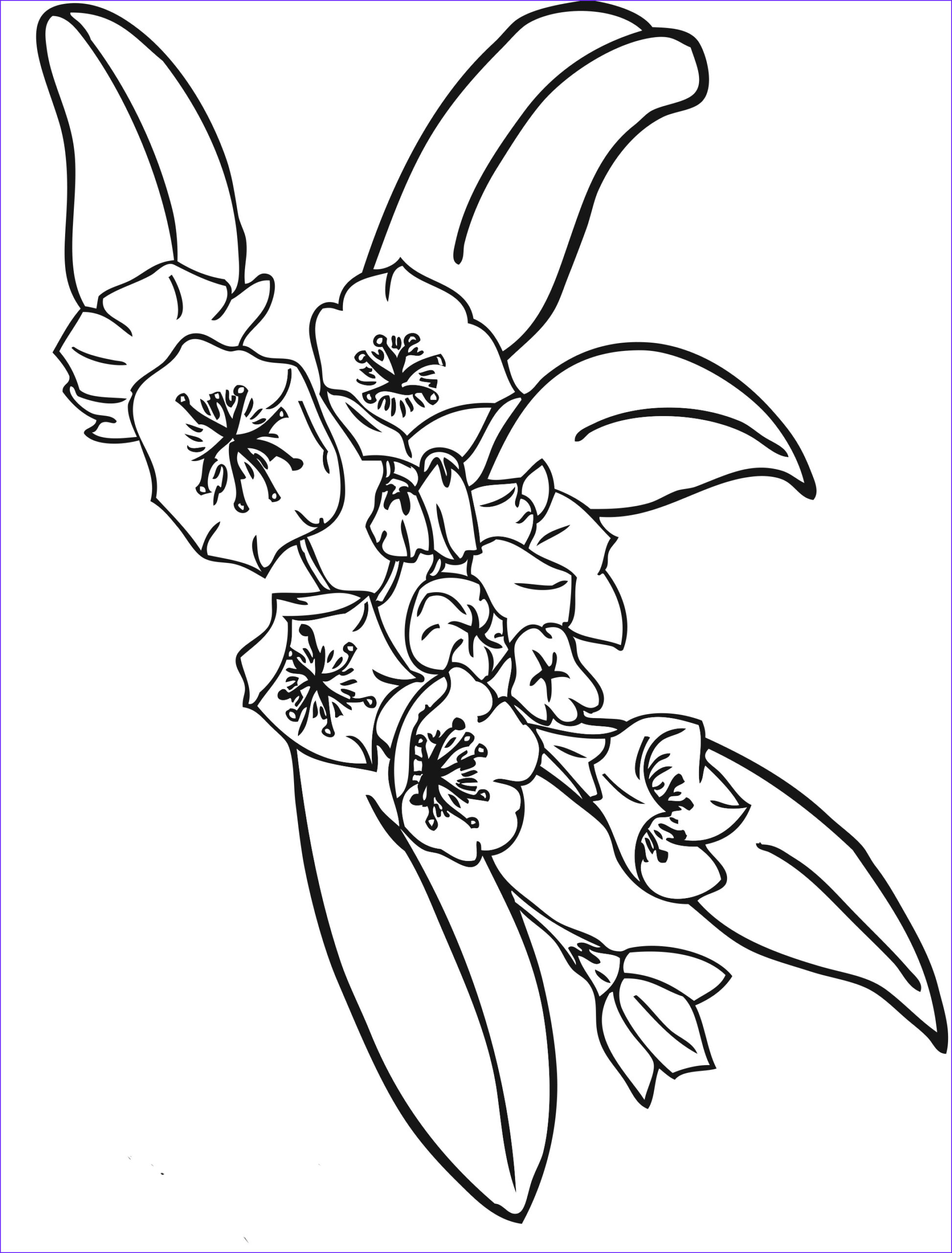 Coloring Book Flowers Luxury Image Free Printable Flower Coloring Pages for Kids Best