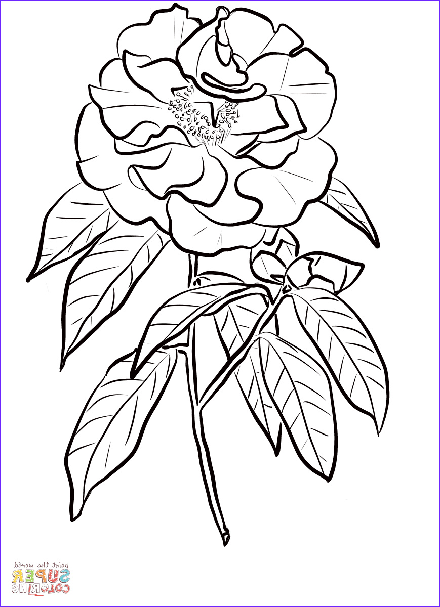 Coloring Book Pages Free Best Of Stock Camellia Reticulata Coloring Page