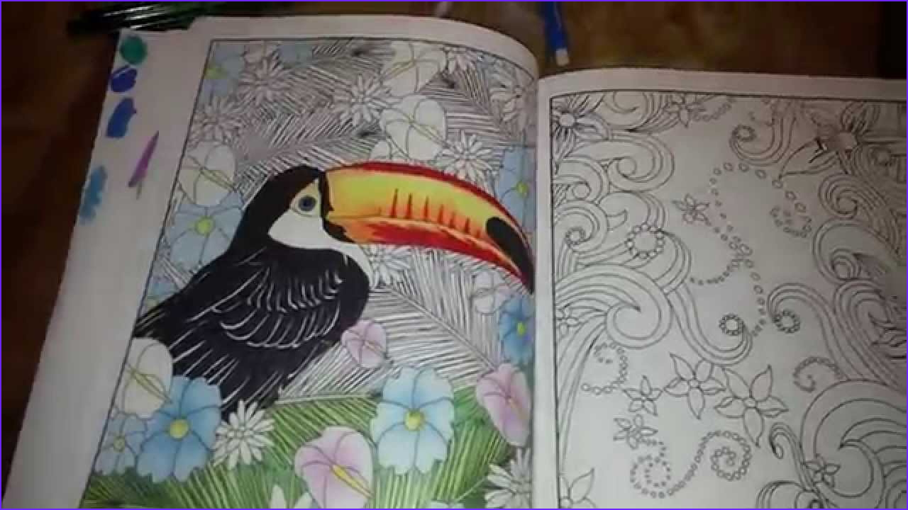 Coloring Book Pencils Cool Collection Adult Coloring Book Pencils Markers Review