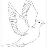 Coloring Book Torrent Beautiful Stock Free Printout For A Dove Pattern