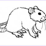 Coloring Books for toddlers Awesome Image Free Printable Rat Coloring Pages for Kids
