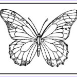 Coloring Butterflies Awesome Image Butterfly Coloring Pages