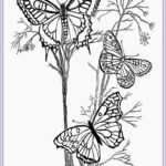 Coloring Butterflies Awesome Stock Adult Coloring Pages Butterfly